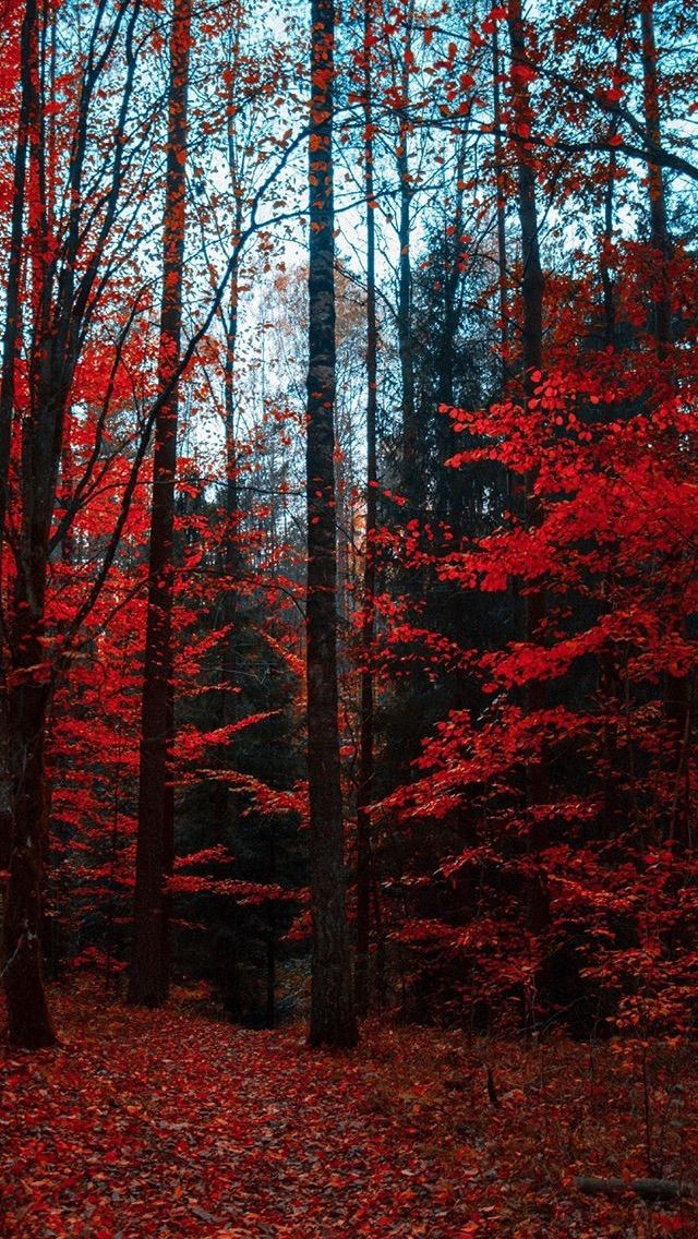 Pin By Eby Uri On Wallpaper Forest Wallpaper Autumn Scenery Red Tree