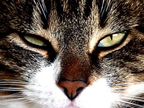 Emma, the grumpy cat. | Flickr - Photo Sharing!