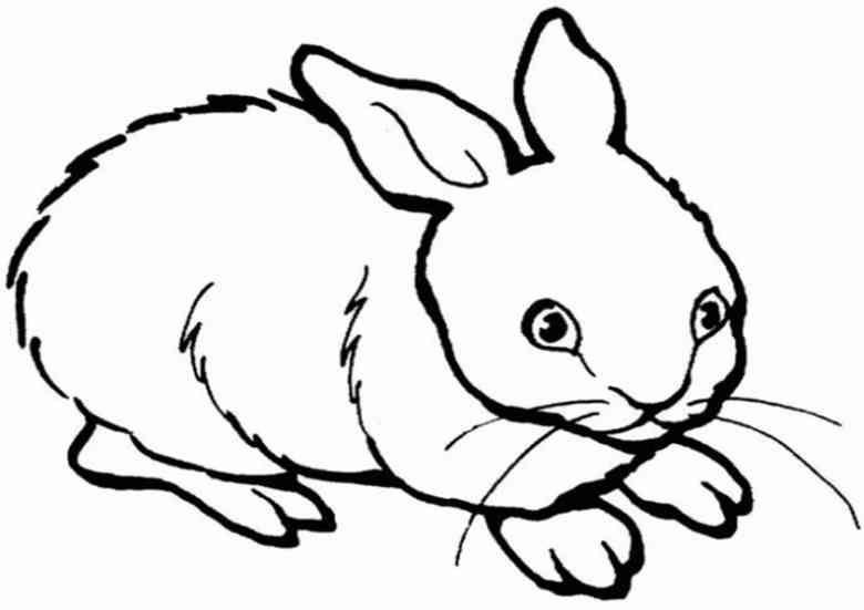 Ausmalbilder Tiere Hase | Ausmalbilder Tiere Kostenlos Zum Drucken ...