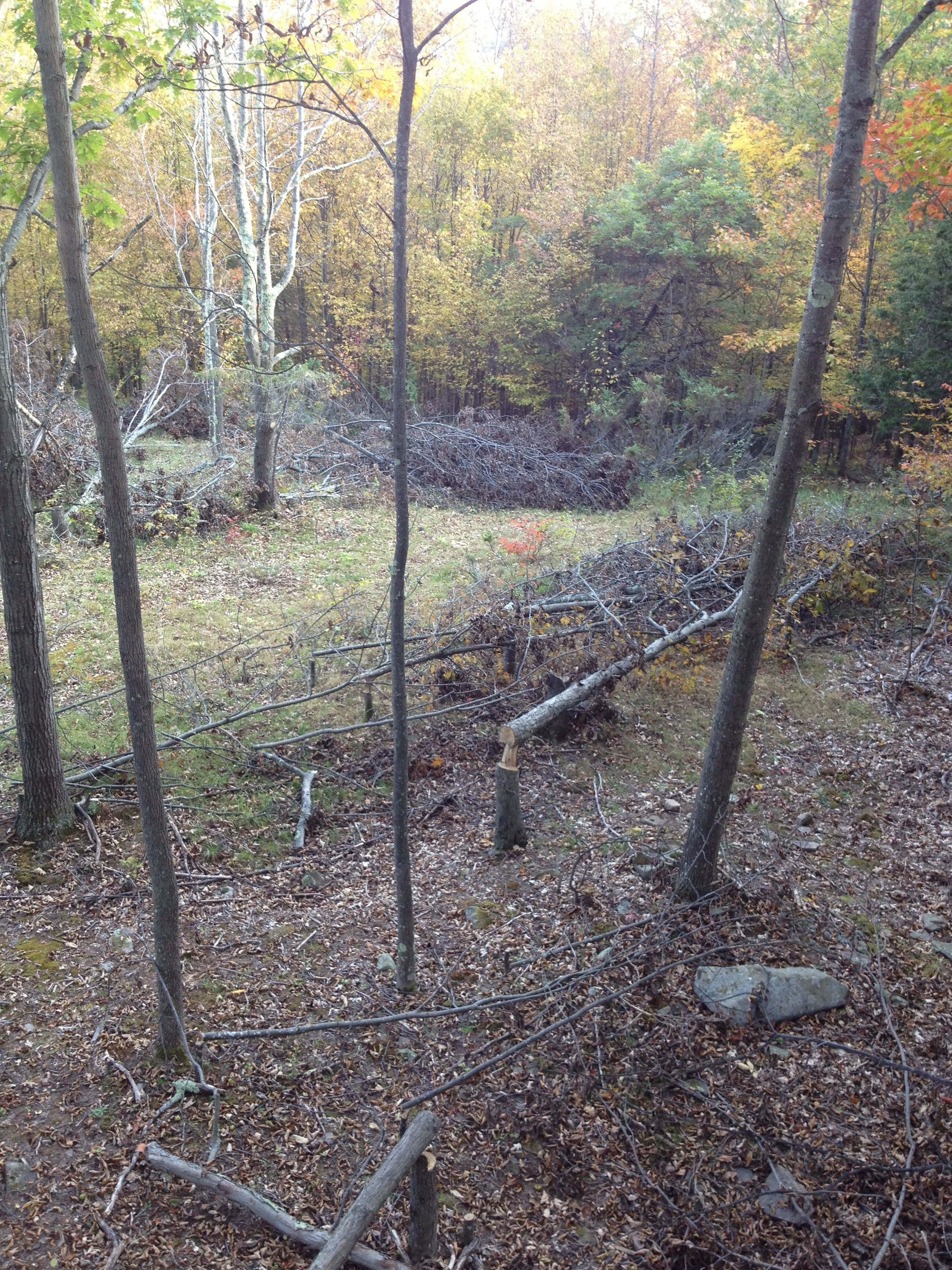 Deer Funnel - Kill Zone | Bowhunting - New York | Whitetail