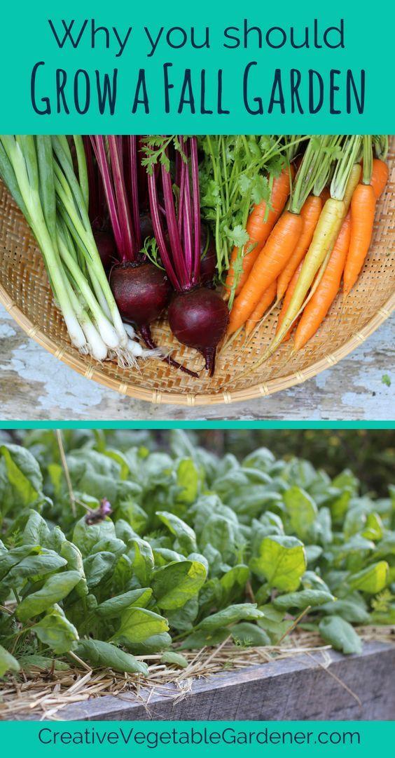 Why Growing a Fall Garden is So Easy - Creative Vegetable Gardener