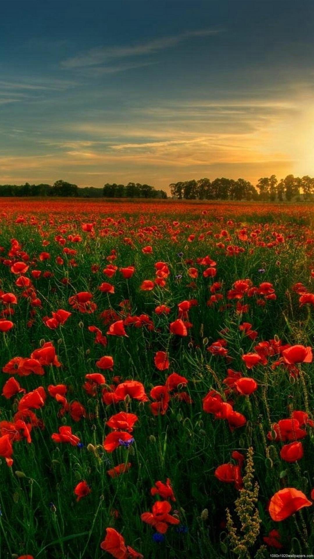 1080x1920 flowers tree sunset field sky wallpapers HD