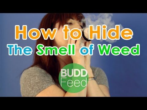How to Hide The Smell of Weed #Buddfeed | Cannabis Life