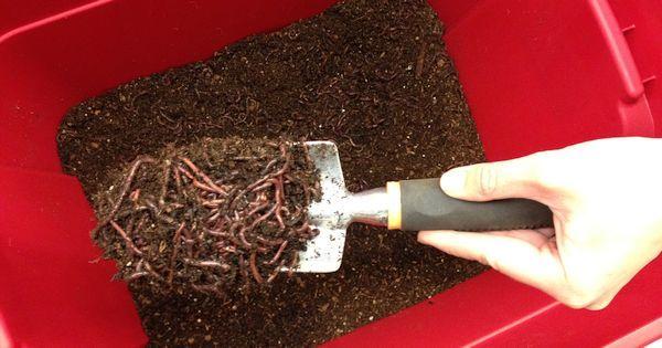 die wurmbox zur kompostierung selbst ohne garten gesunde erde gratis garten pinterest. Black Bedroom Furniture Sets. Home Design Ideas