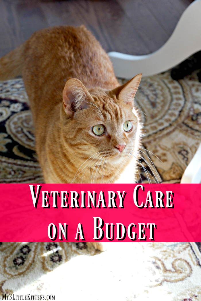 Tips For Understanding Your Cat Veterinary Care Cat Care Cat Training
