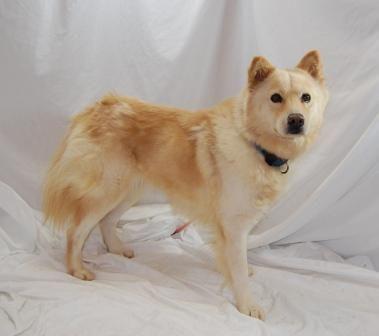 Adopt Liz On Dogs Golden Retriever Retriever Puppy Female