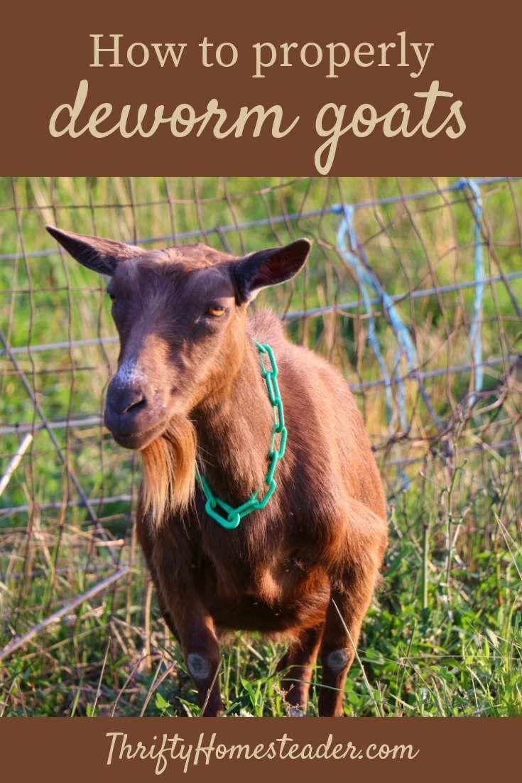 Deworming goats goats breeding goats raising goats