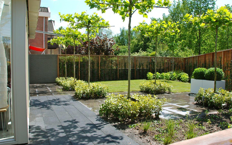 Parasolbomen met gevormde onderbegroeiing tuinontwerp for Tuinarchitect kleine tuin