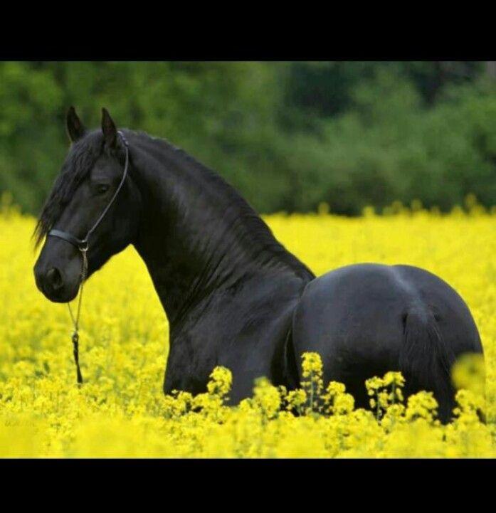 Reminder of Sonny.. (: #Cousin's horse