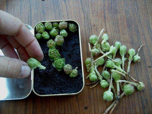 26 magníficos minijardines tan pequeños que caben en la palma de una