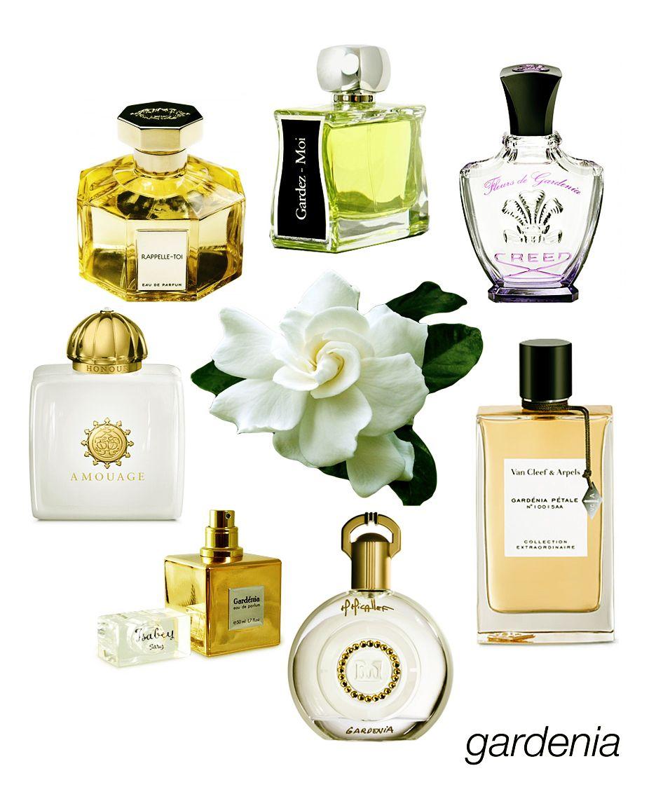 Swoon Worthy Gardenias Rappelle Toi Gardez Moi Fleur De
