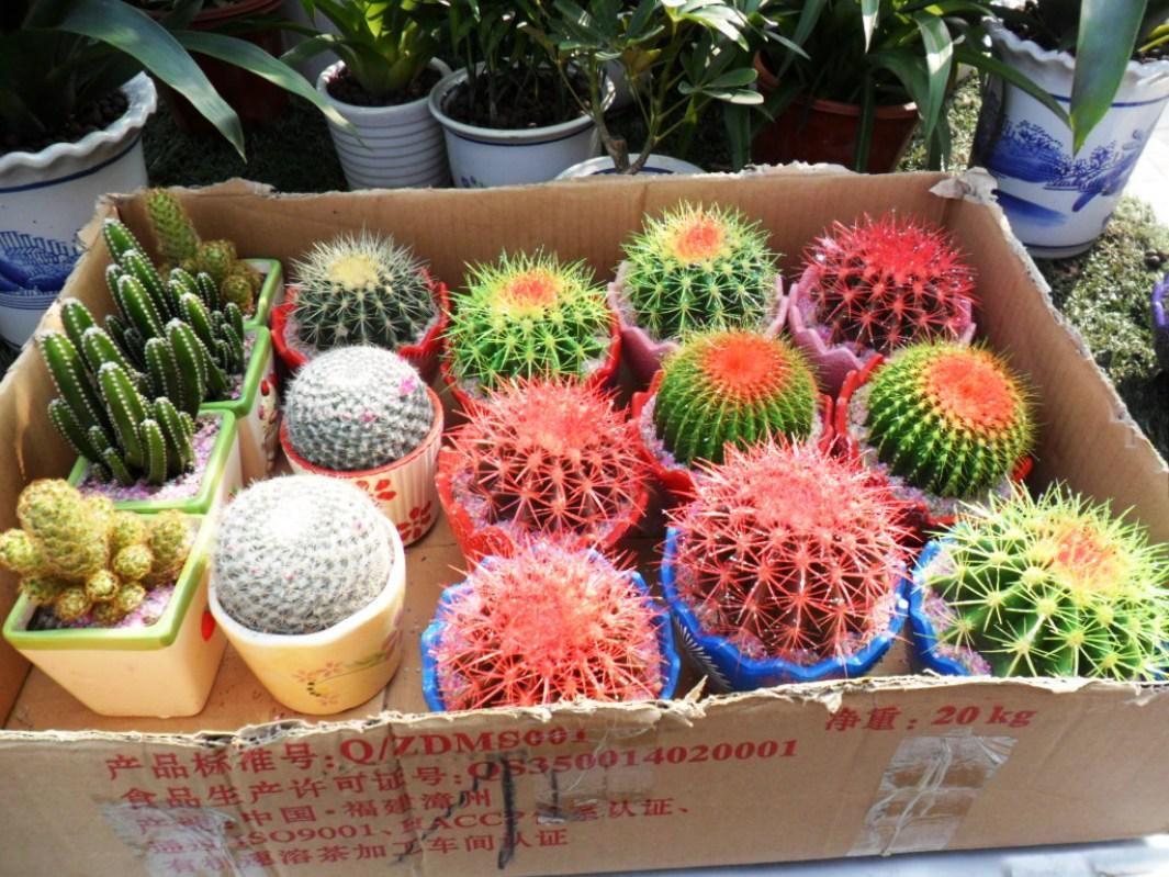 Merveilleux Cute Small Cactus Garden Ideas U2014 EMERSON Design : How To Make Cactus Garden  Ideas