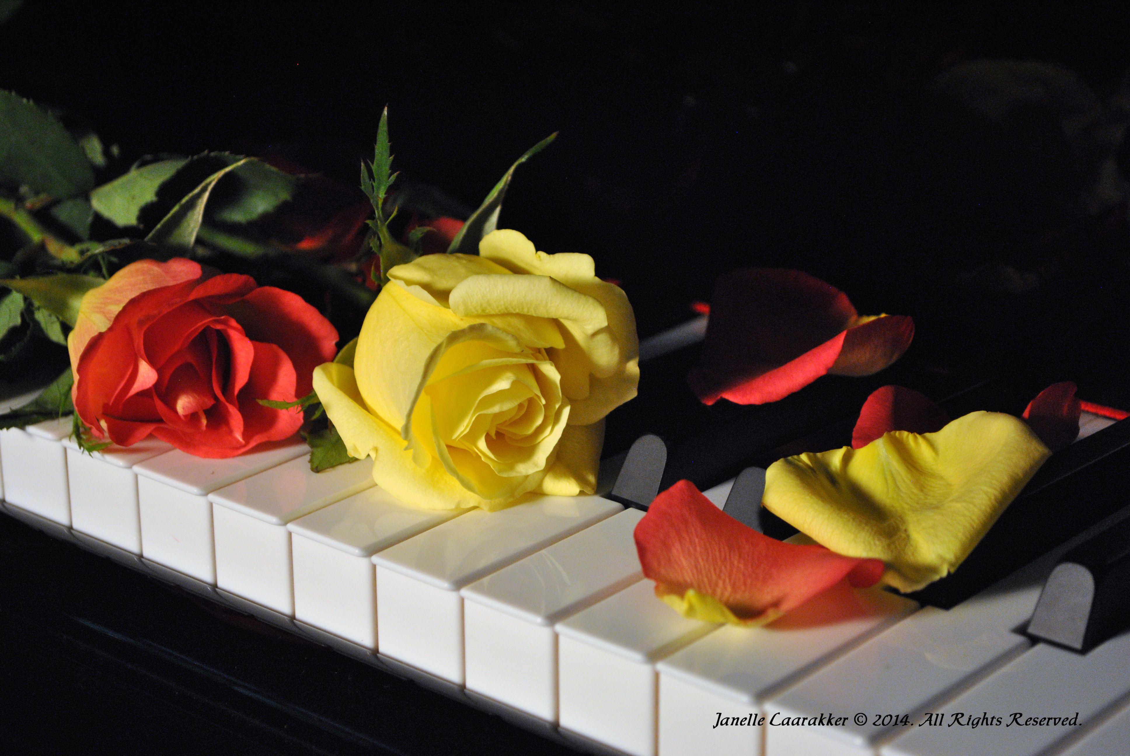Piano Keys & Roses - an original photograph by Janelle Laarakker.