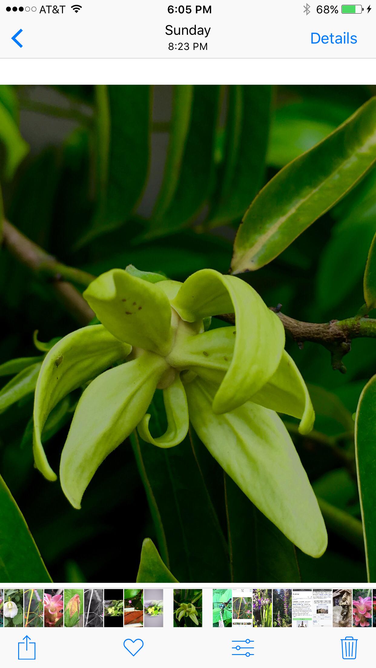 Sampangi The Divinely Fragrant Flower Garden Pinterest