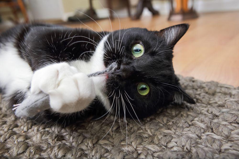 Beyond Catnip Alternatives Your Kitty Might Like Cat