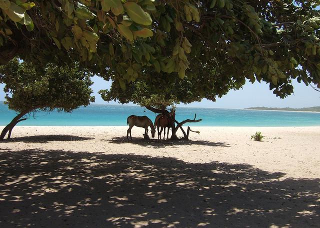 25 of the Coolest Beaches in the World: Natadola Beach, Fiji
