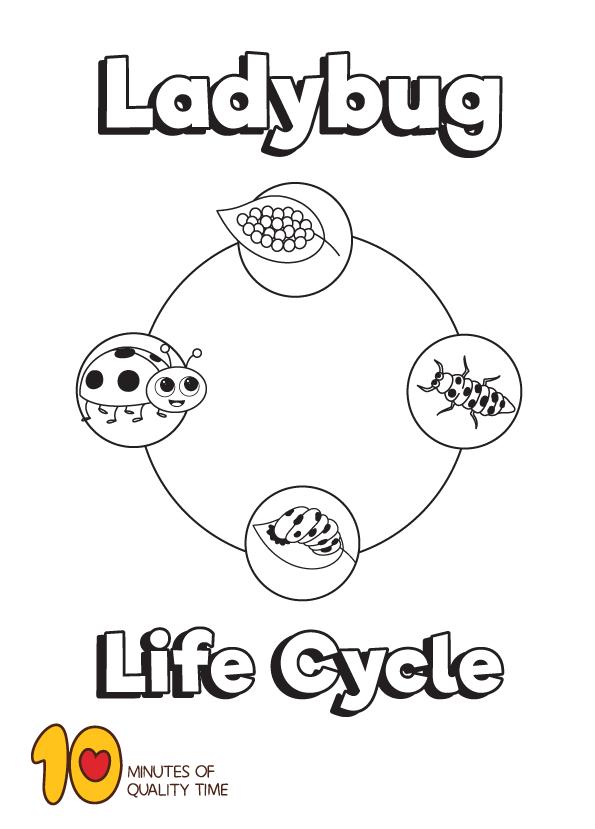 Life Cycle Of A Ladybug Coloring Page Ladybug Coloring Page Life Cycles Ladybug Life Cycle