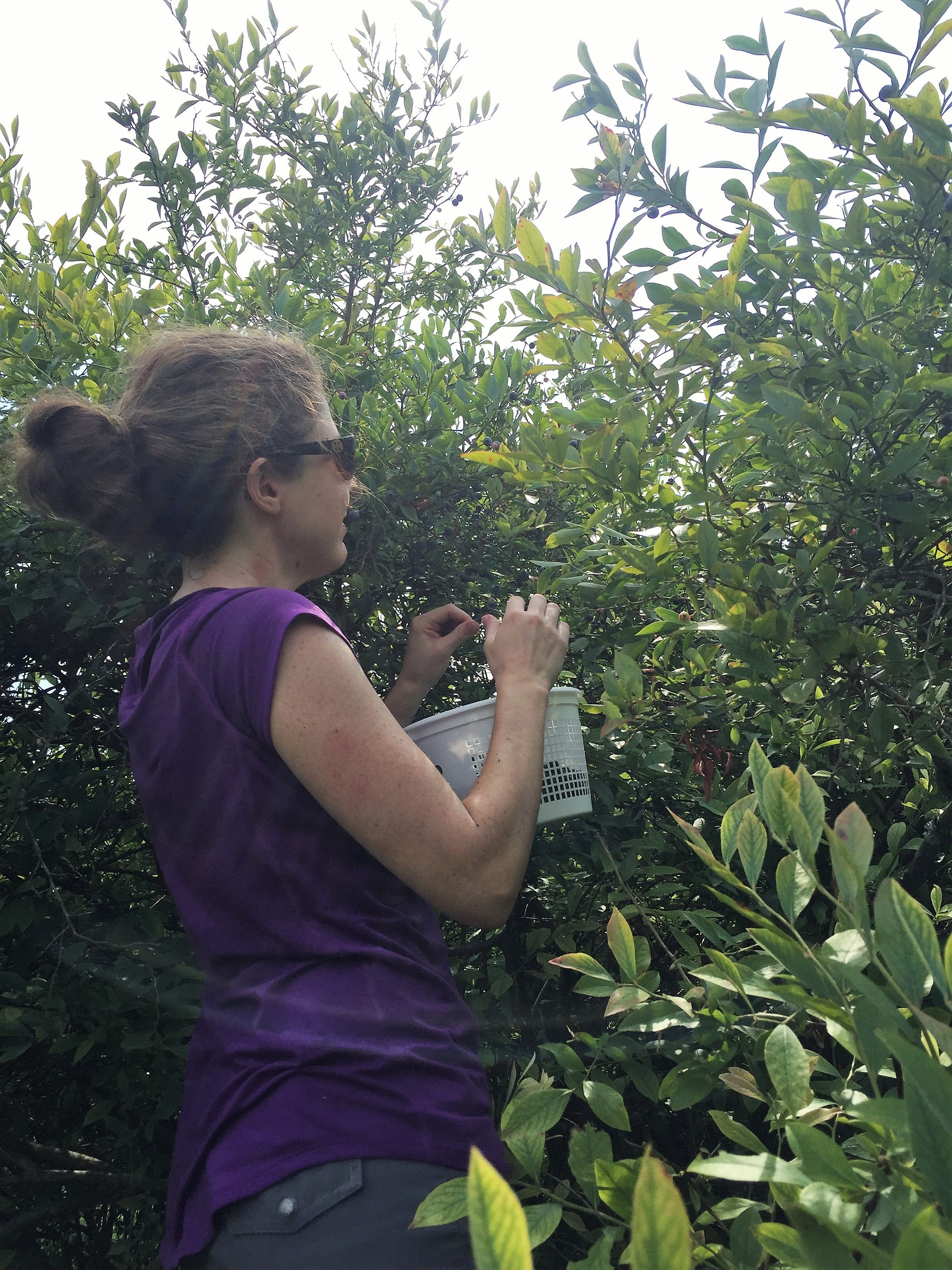The One Thing I Never Do When Blueberry Picking  Preserve 2.0