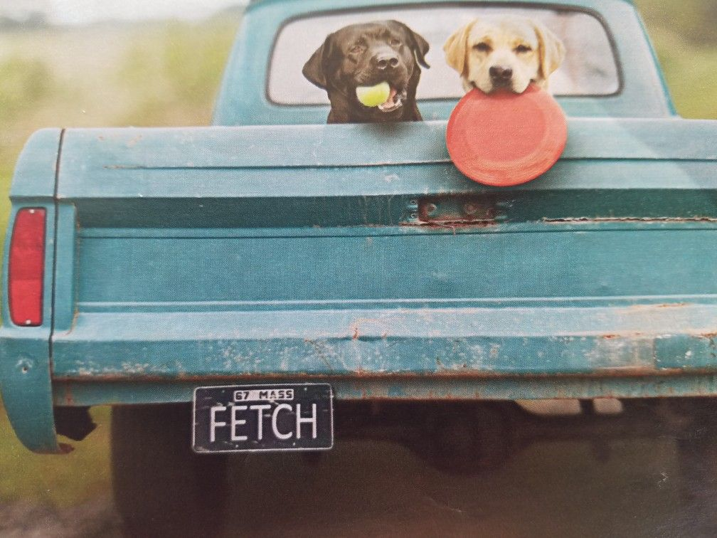 Pin by Naomi Duval on Dogs Toy chest, Vanity plate, Dogs