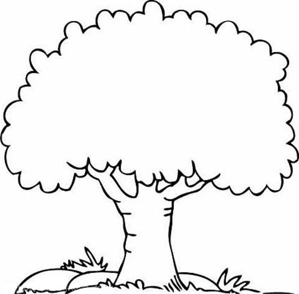 trees coloring pages for kids - photo#17