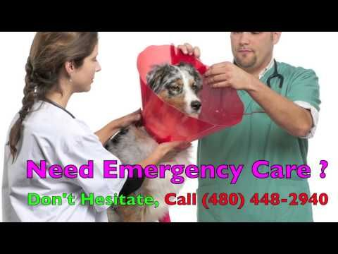Http Www Youtube Com Watch V Wtah7c39za8 Emergency Vet Gilbert Az Call 480 448 2940 Emergency Veterinarian A Emergency Vet Pet Emergency Emergency Care