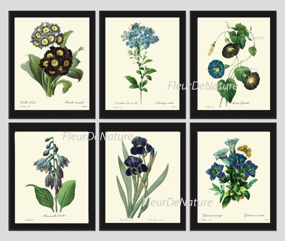 BOTANICAL Print SET of 6 Art Prints 8X10 Redoute Blue Flower