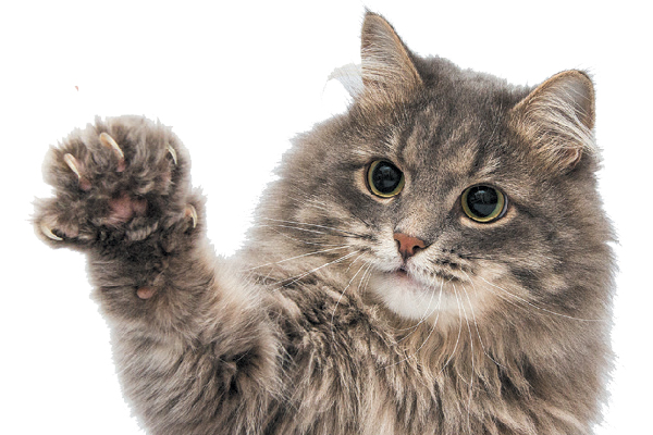 How to Trim Cat Nails, and Why You Should Catster Trim