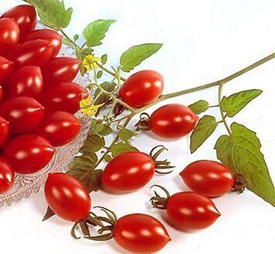 Sugary Cherry Tomato With Images Cherry Tomato Plant 400 x 300