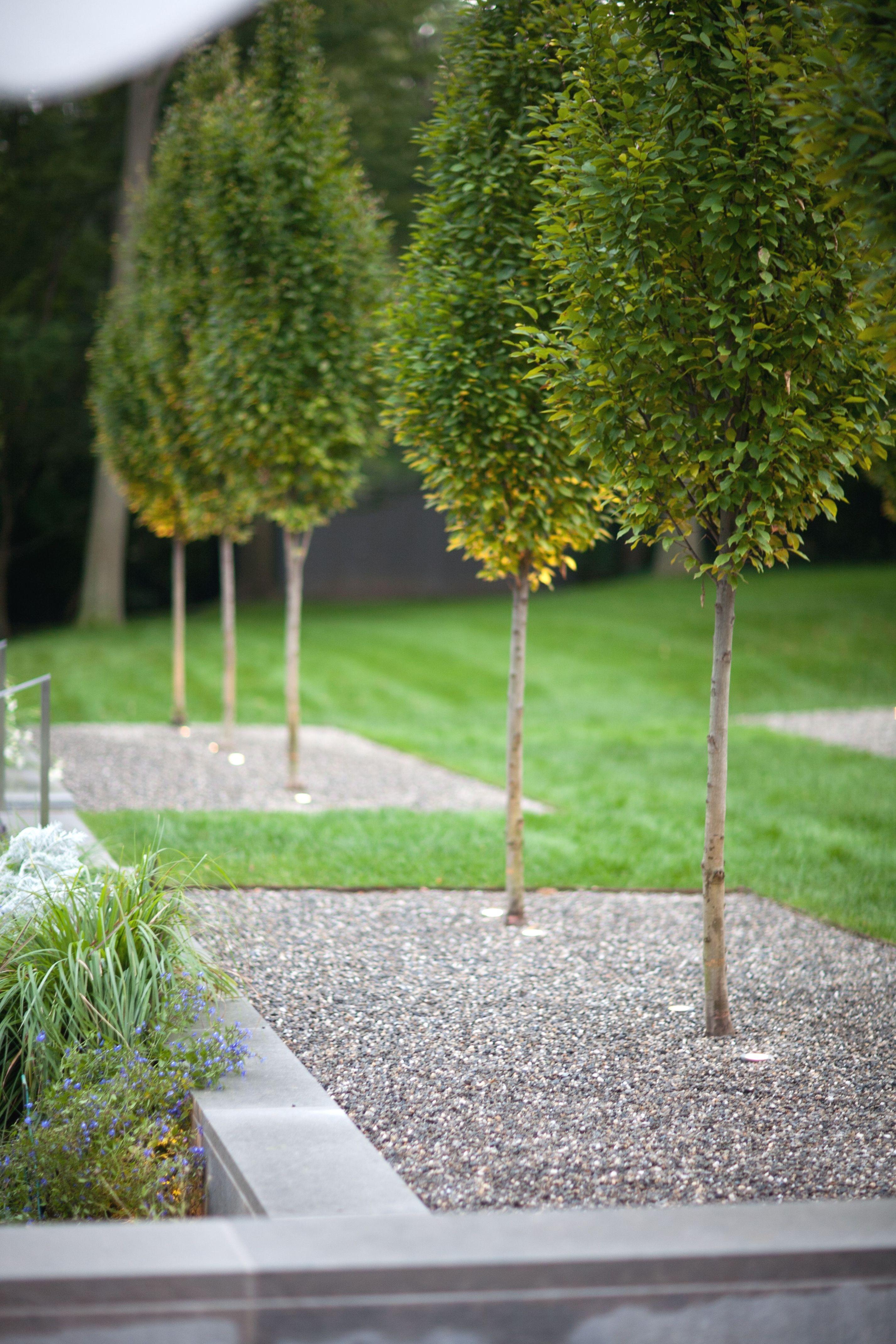 landscaping training Modern garden landscaping, Modern