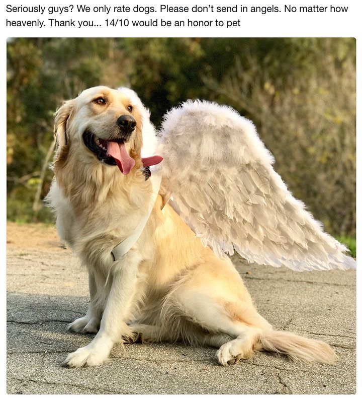 CuteFeelGoodWholesomeMemeDump20.jpg (720×792) Dog