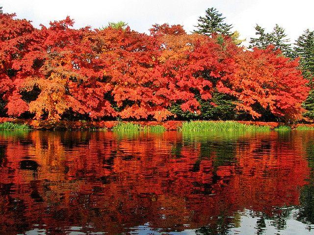 fall leaves in karuizawa, japan