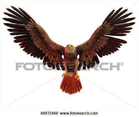 eagle wings spread - Google Search   Musings   Pinterest