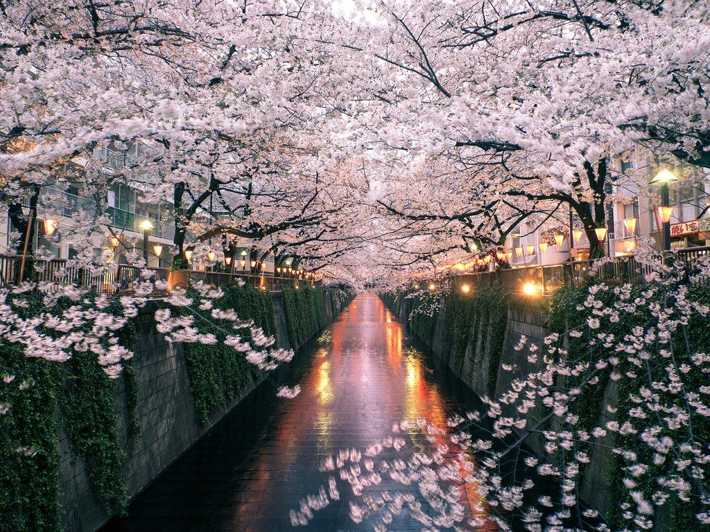 The Best Countries In The World 2020 Readers Choice Awards Japan Cherry Blossom Festival Cherry Blossom Japan Cherry Blossom Season