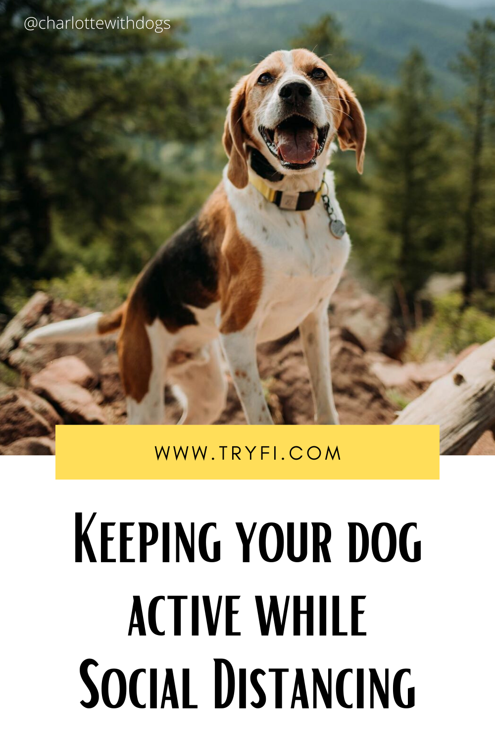 Keeping Your Dog Active While Social Distancing in 2020