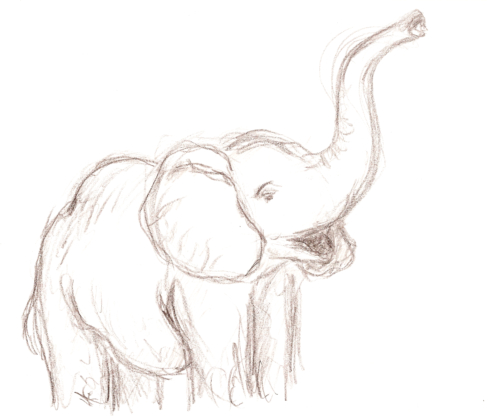 elephant drawing - Google Search