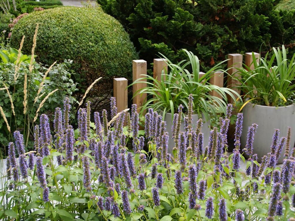 Tuinontwerp voortuin antoon gouw tuin ideeën g&i pinterest