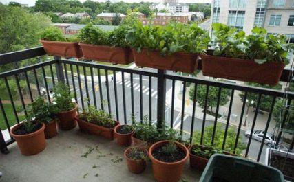 51+ Trendy Apartment Balcony Pictures | Balcony plants ...