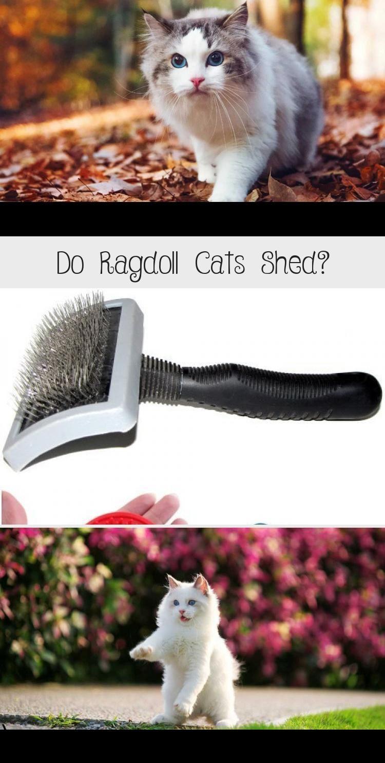 My Blog En Blog In 2020 Cat Shedding Cat Groomer Ragdoll Cat