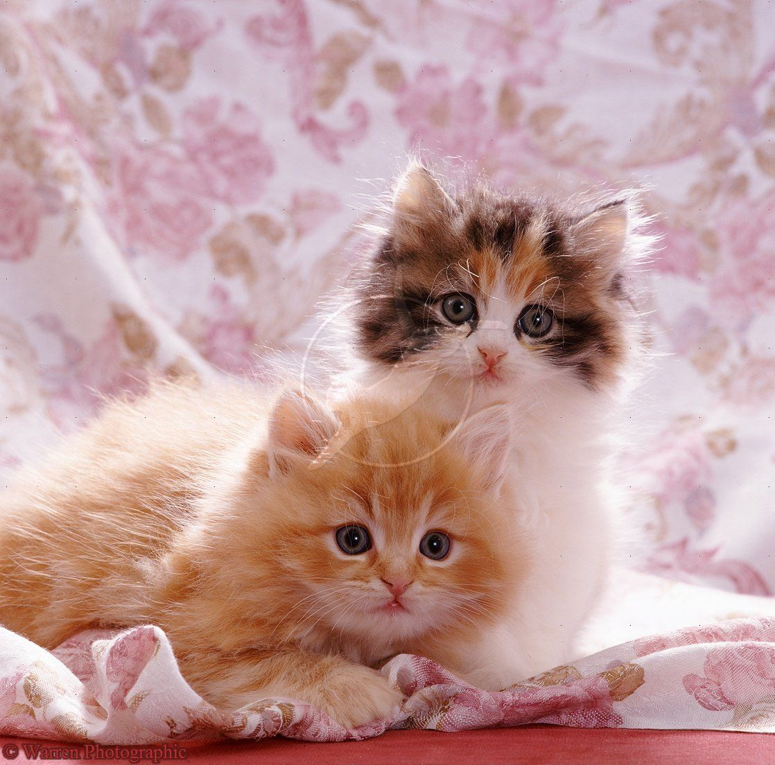 cute cats images | very cute cat and kitten picture cute ...