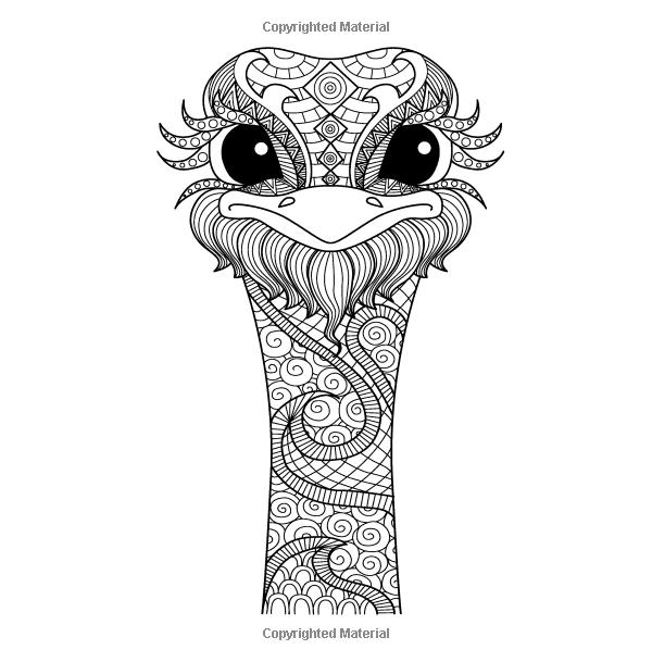 Amazon.com: Animal Kingdom para colorear Patrones - modelo para ...