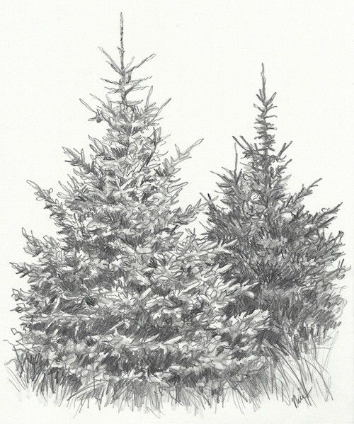 How To Draw Evergreen Trees Landscape Pencil Drawings Landscape Drawings Tree Drawings Pencil