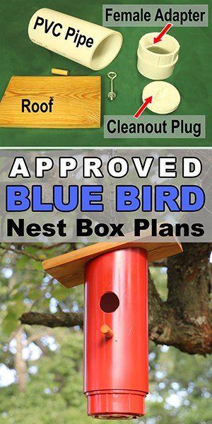 Blue Bird Nest Box Plans (Approved PVC Birdhouse Design) #smallbirds