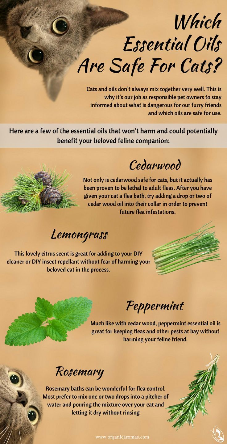 Which Essential Oils Are Safe for Cats Essential oils