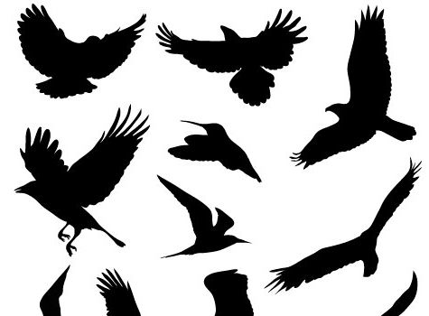 the ultimate collection of free vector packs graphic designers rh pinterest com bird vectors photoshop bird cage vectors