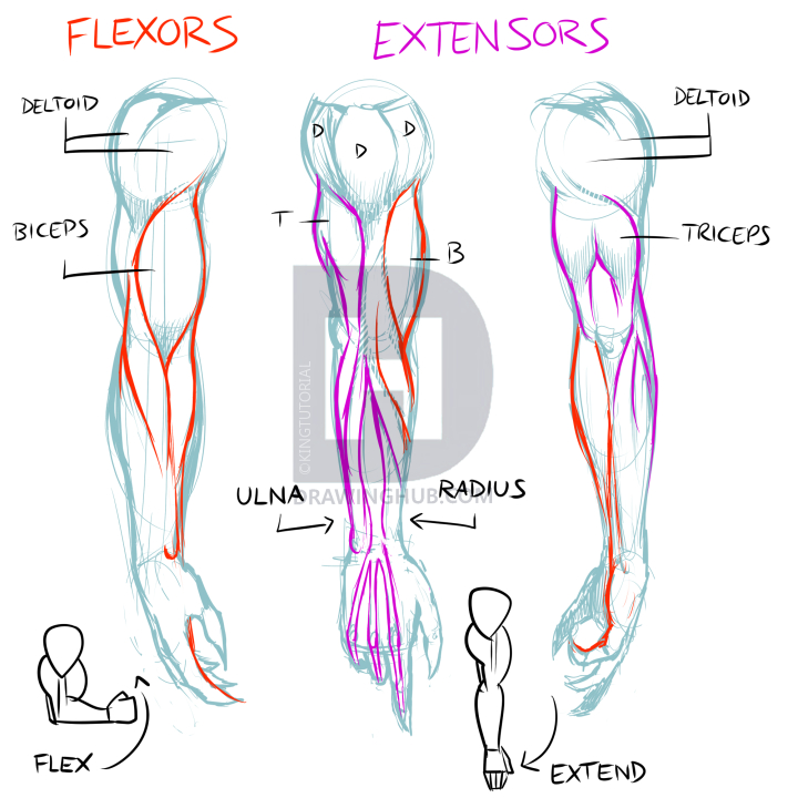 39++ How to draw biceps inspirations