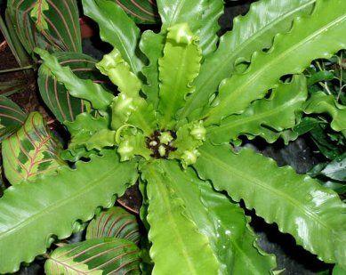 6 plantas que crecen estupendamente en condiciones de for Plantas de interior con poca luz