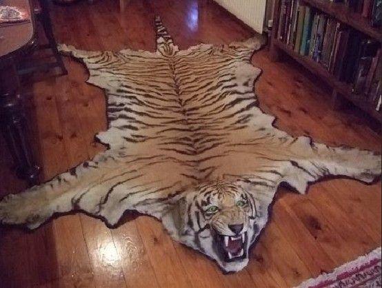 Don T Be Afraid To Use Animal Skin Gorgeous Lion Rug