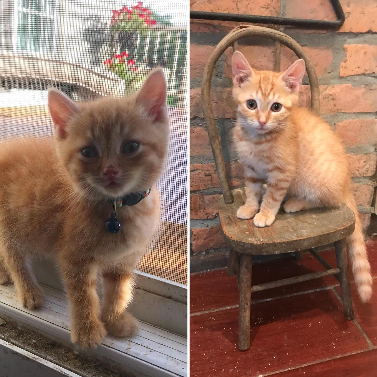 Before And After Hank Is Now 3 Months Old And Loves Sitting In His Favorite Spot Close To The Food Bowl Beautiful Kittens Kittens And Puppies Kittens Cutest