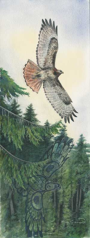 Red Tailed Hawk. Full Image. Weyekin.