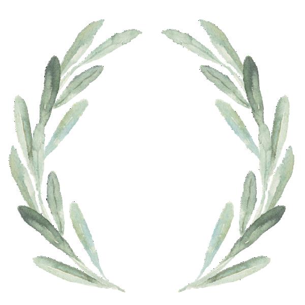 Watercolor Green Olive Branch Wreath Monogram Paper Napkins Zazzle Com In 2020 Olive Branch Wreath Olive Branch Plant Illustration